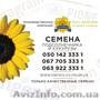 Семена подсолнечника / Сертифіковане насіння соняшника - Изображение #5, Объявление #1588891