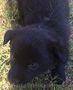 Щенки от мелкой дворовой собачки - Изображение #3, Объявление #1631322