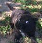 Щенки от мелкой дворовой собачки - Изображение #6, Объявление #1631322