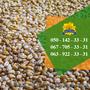 Насіння від виробника: пшениця, соняшник, кукурудза - Изображение #4, Объявление #1588896
