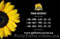 Семена подсолнечника / Рекольд - насіння соняшника - Изображение #3, Объявление #1588893
