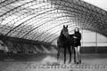 Фотосессии с лошадьми Харьков,  фото с лошадью,  фотограф Харьков