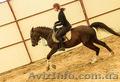Обучение верховой езде в Харькове,  уроки верховой езды