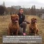 Профессиональный инструктор по вязке собак