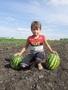 Продам арбуз с поля - Изображение #3, Объявление #1662854